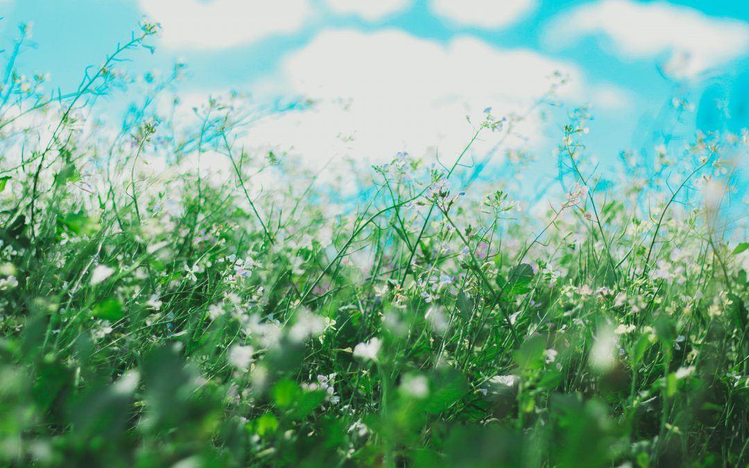 6 gode råd til allergi og kontaktlinser
